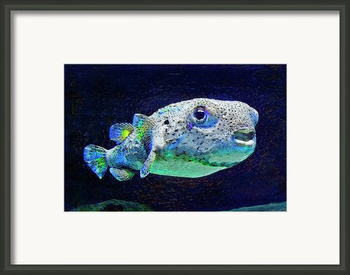 Puffer Fish Framed Print By Jane Schnetlage