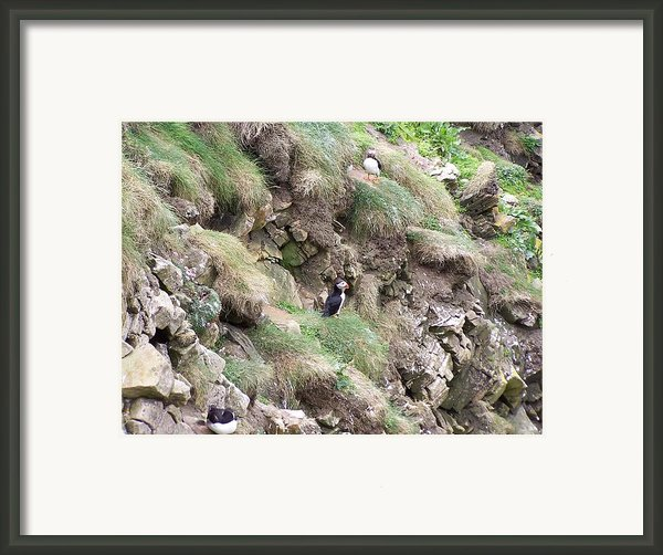 Puffins  Framed Print By George Leask