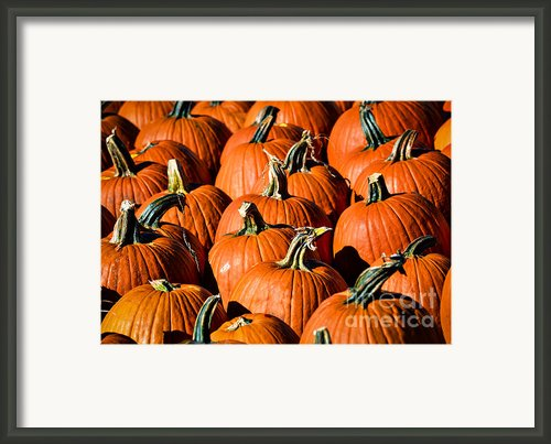 Pumpkins Galore Framed Print By Julie Palencia