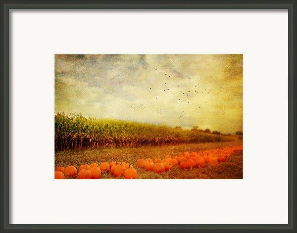 Pumpkins In The Corn Field Framed Print By Kathy Jennings