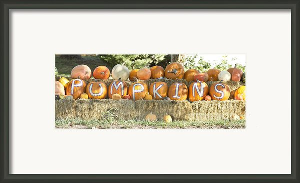 Pumpkins P U M P K I N S Framed Print By James Bo  Insogna