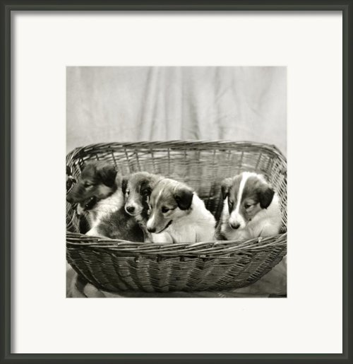 Puppies Of The Past Framed Print By Marilyn Hunt