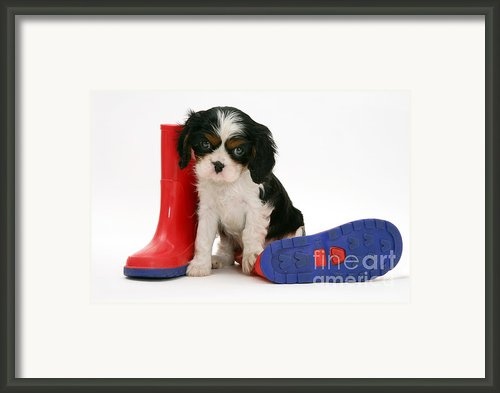 Puppies With A Childs Rain Boots Framed Print By Jane Burton
