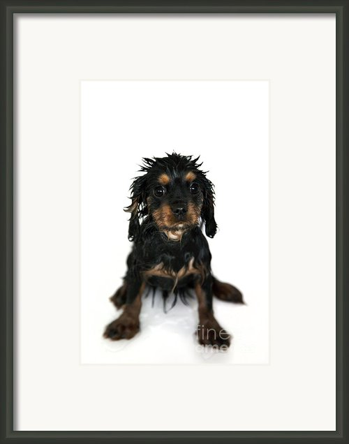 Puppy Bathtime Framed Print By Jane Rix