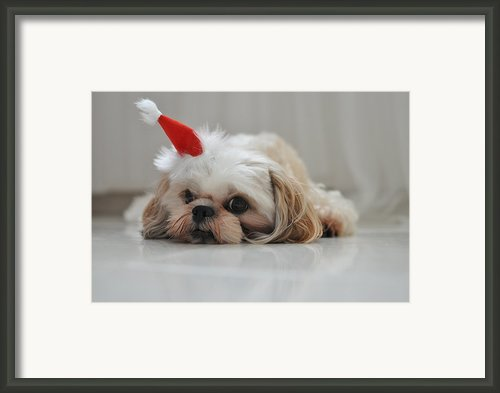 Puppy Wearing Santa Hat Framed Print By Sonicloh