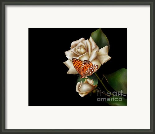 Purity Framed Print By Cheryl Young