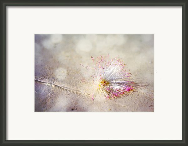 Purity Framed Print By Jenny Rainbow