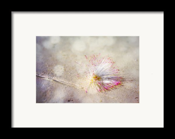 Purity Framed Print By Jenny Rainbow