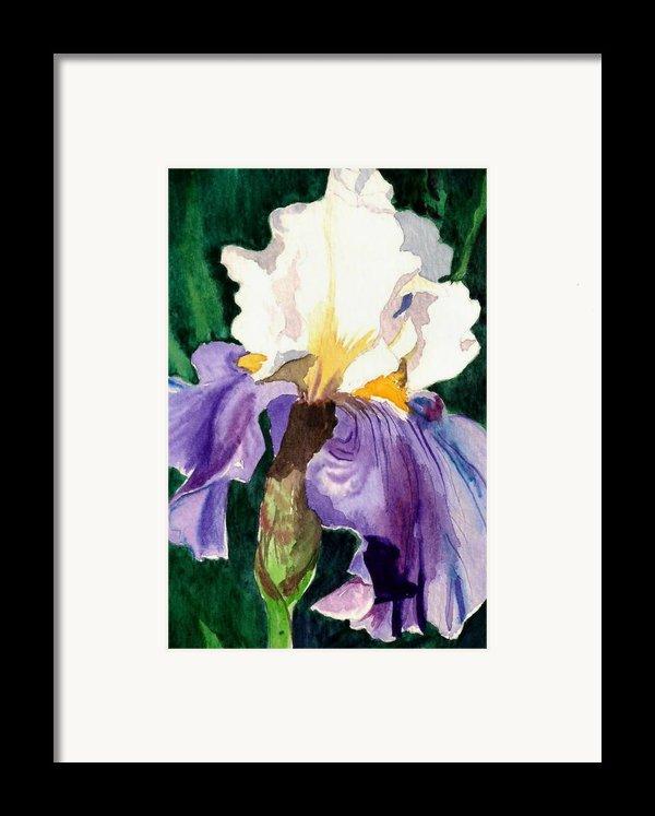 Purple And White Iris Framed Print By Janis Grau