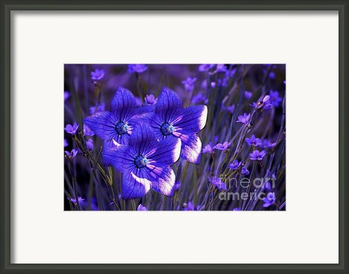 Purple Florwer Abstract Framed Print By Marjorie Imbeau