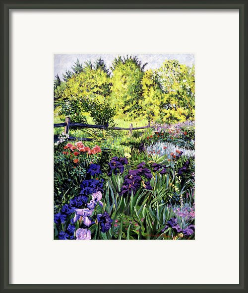 Purple Garden Framed Print By David Lloyd Glover