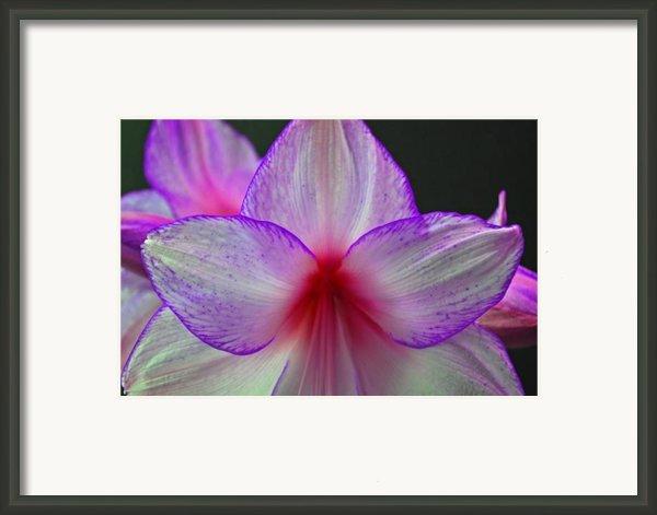 Purple Haze Framed Print By Donna Shahan