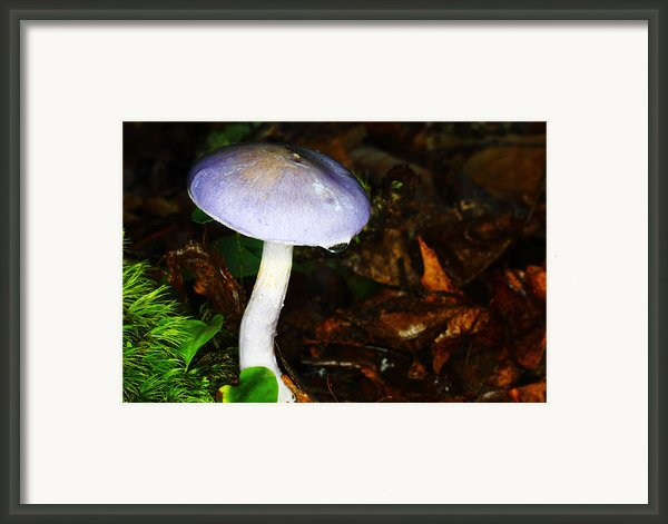Purple Mushroom Russula Cyanoxantha Framed Print By Andrew Pacheco