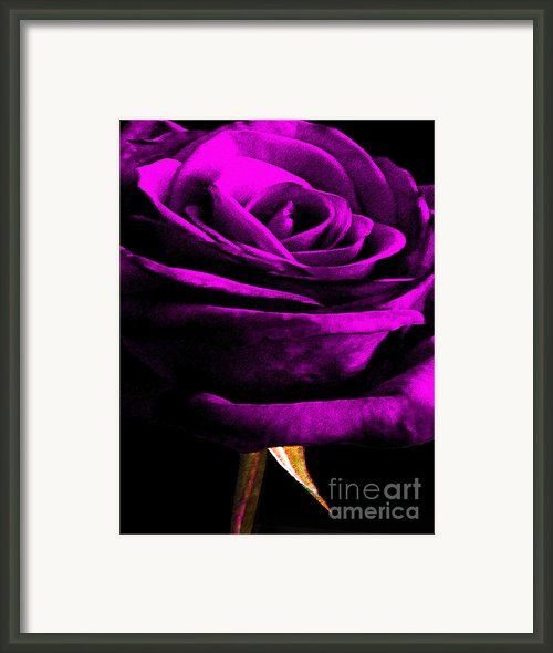 Purple Velvet Rose Framed Print By Egiclee Digital Prints