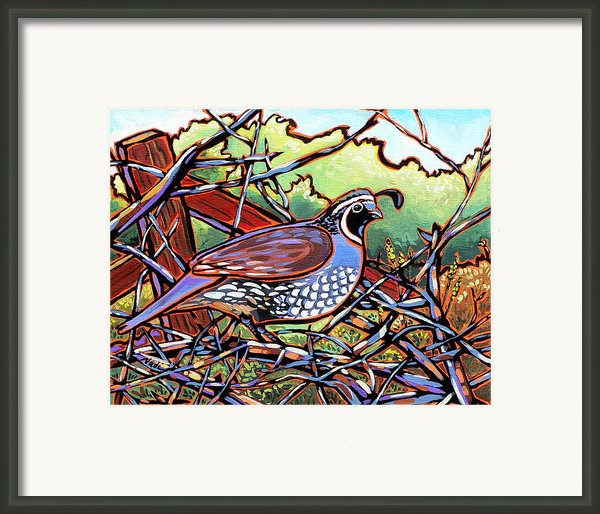 Quail Framed Print By Nadi Spencer