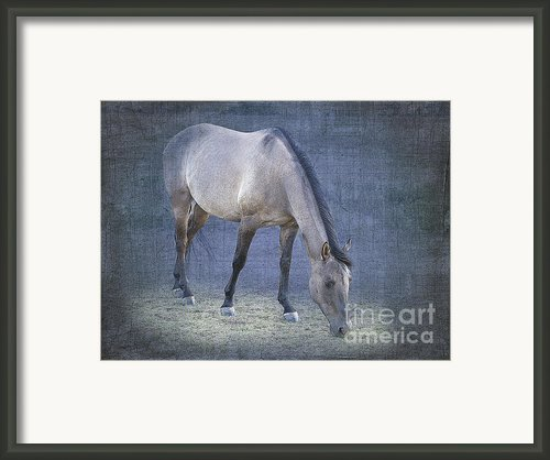 Quarter Horse In Blue Framed Print By Betty Larue