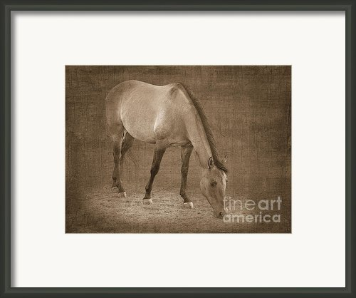 Quarter Horse In Sepia Framed Print By Betty Larue