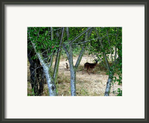 Rabbit Spying On Buck In Velvet Framed Print By The Kepharts