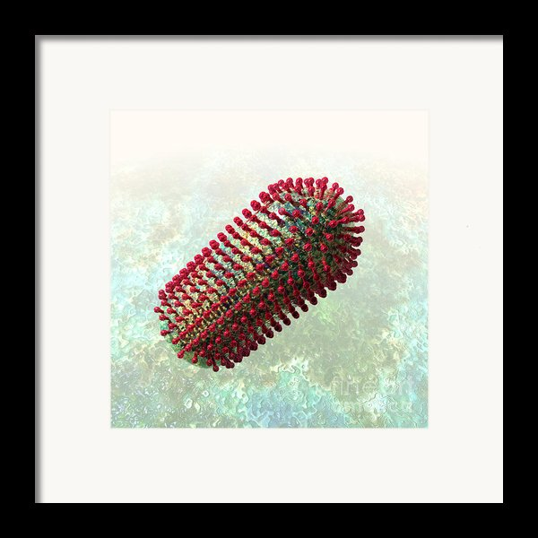 Rabies Virus 2 Framed Print By Russell Kightley
