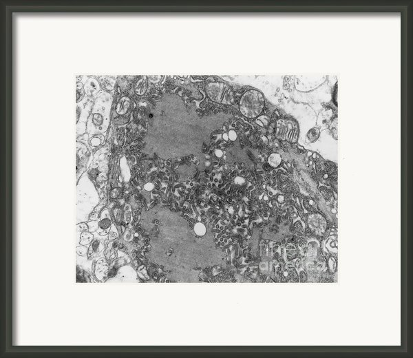 Rabies Virus Framed Print By Science Source