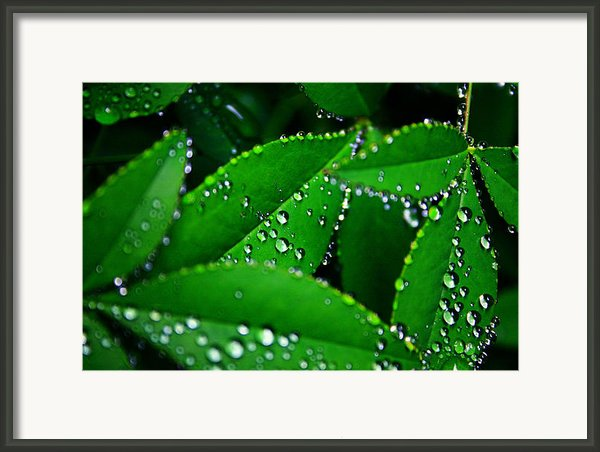 Rain Patterns Framed Print By Toni Hopper