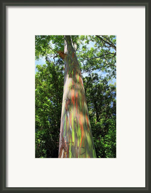 Rainbow Tree Framed Print By Pierre Leclerc
