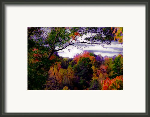 Rainbow Treetops Framed Print By Digiart Diaries By Vicky Browning