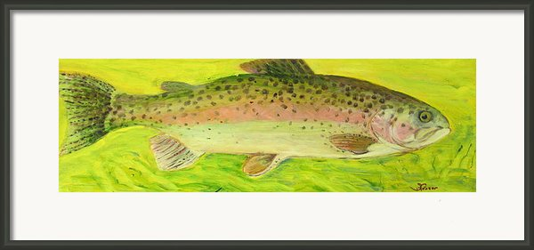 Rainbow Trout Framed Print By Sally Fraser