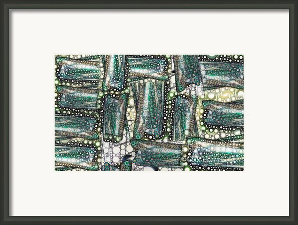 Rainbow Trout Thingies Framed Print By Ron Bissett