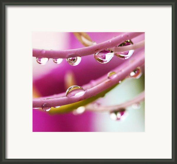 Raindrops Framed Print By Marilyn Hunt