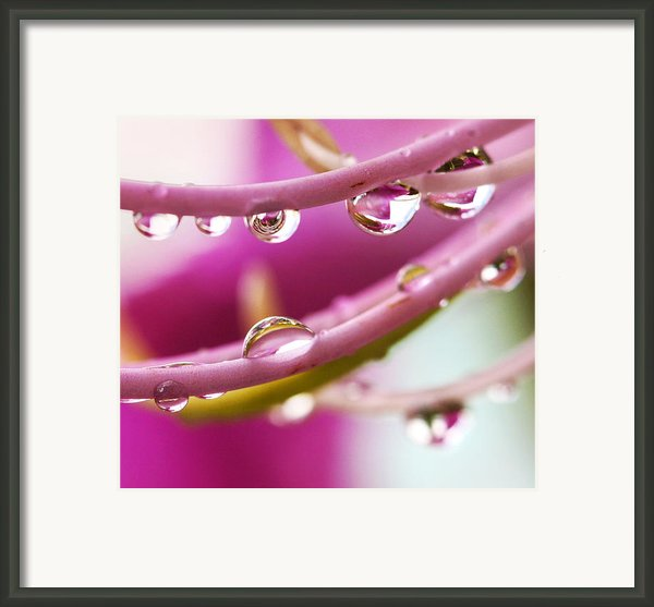 Raindrops Framed Print By Marilyn Hunt