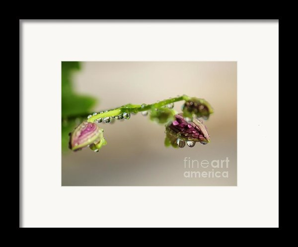 Raindrops On Orchid Buds Framed Print By Theresa Willingham