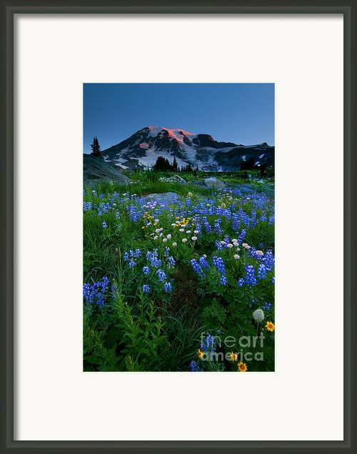 Rainier Wildflower Dawn Framed Print By Mike  Dawson