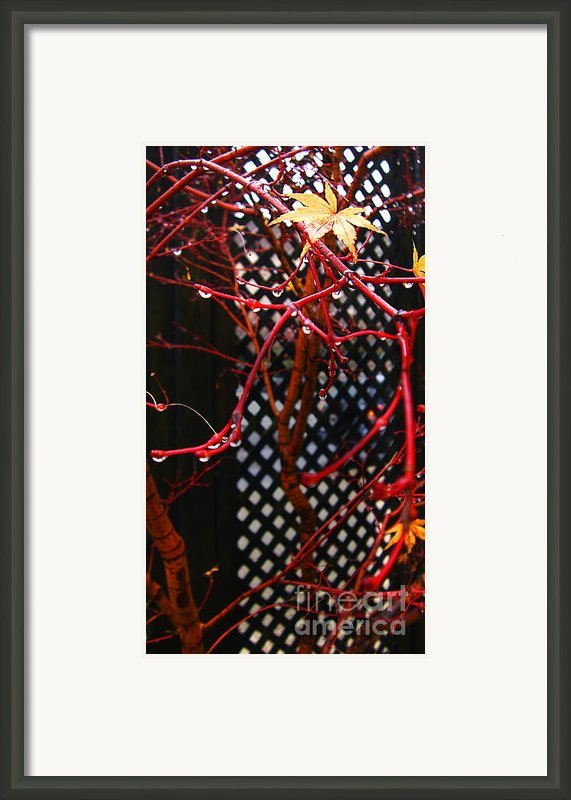 Raining Autumn Leaves Framed Print By Xueling Zou