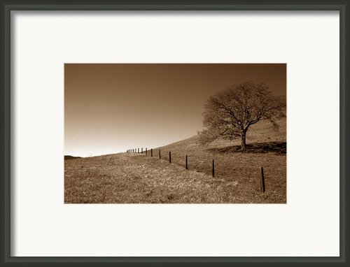 Ranch Road Oak Framed Print By Kathy Yates
