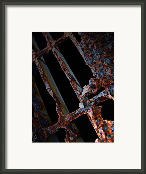 Rat In The Cage Framed Print By Jerry Cordeiro
