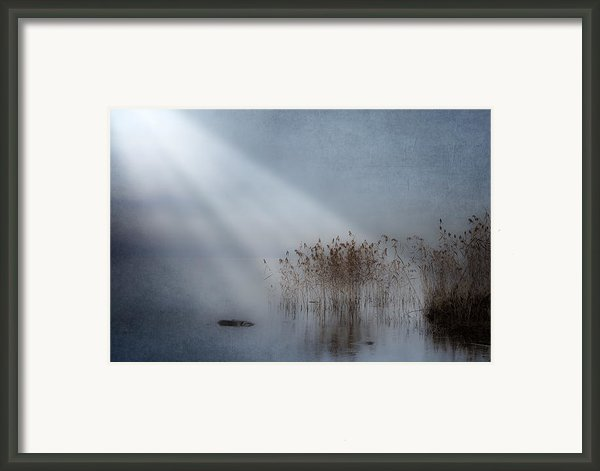 Rays Of Light Framed Print By Joana Kruse