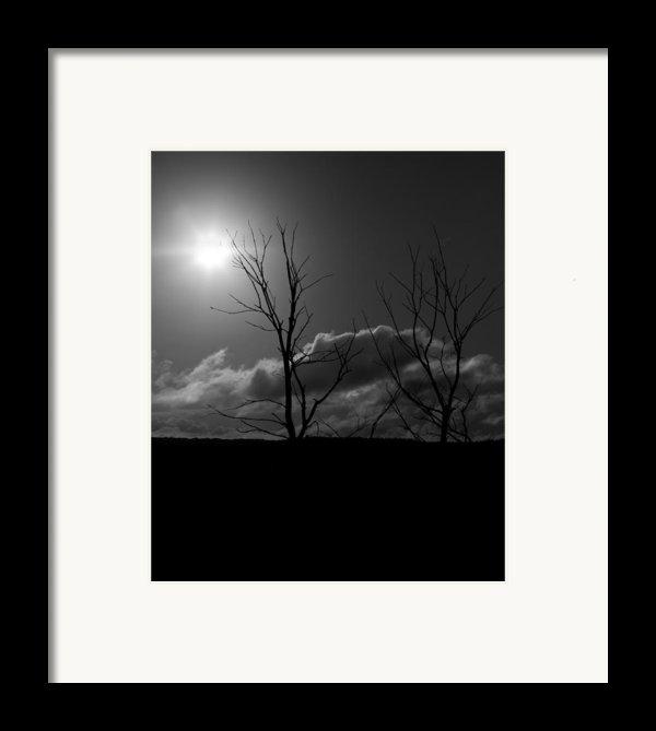 Reach For The Sun Framed Print By Nigel Jones