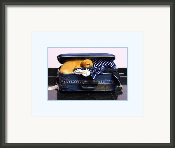Ready To Fly Framed Print By Pradeep Subramanian