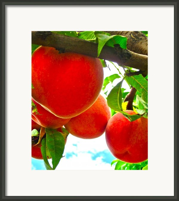 Ready To Pick Framed Print By Gwyn Newcombe