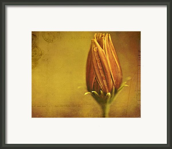 Recollection Framed Print By Bonnie Bruno