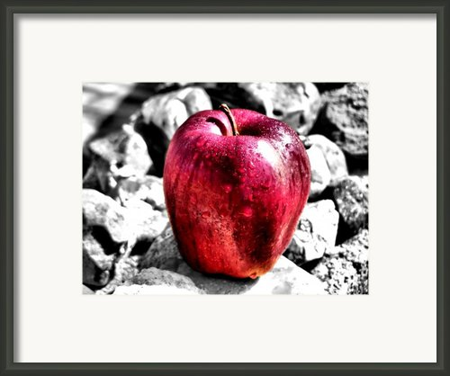 Red Apple Framed Print By Karen M Scovill