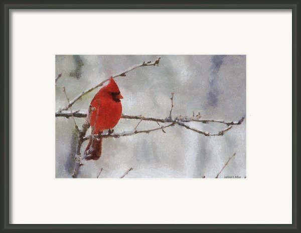 Red Bird Of Winter Framed Print By Jeff Kolker