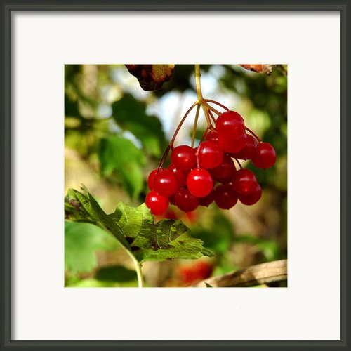 Red Bunch Framed Print By Leeann Mclanegoetz Mclanegoetzstudiollccom