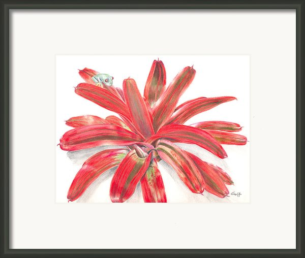 Red-eyed Tree Frog On Bromeliad Framed Print By Penrith Goff