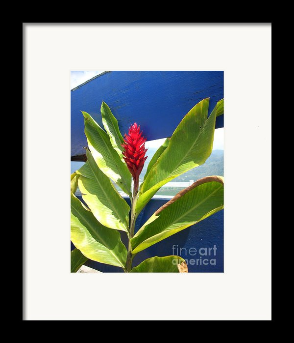 Red Ginger Framed Print By Randi Shenkman