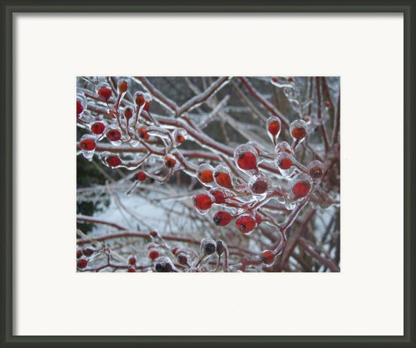 Red Ice Berries Framed Print By Kristine Nora