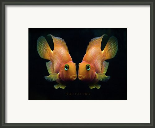 Red Parrot Fish Framed Print By Mariclick Photography