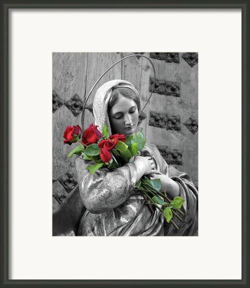 Red Roses Framed Print By Munir Alawi
