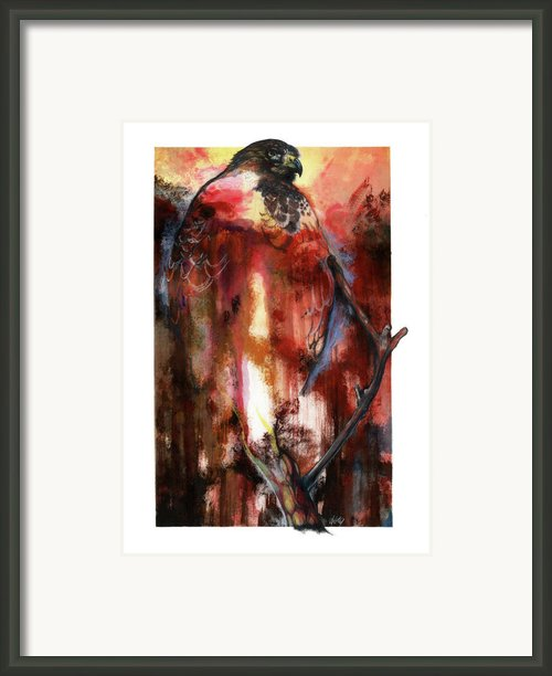 Red Tail Framed Print By Anthony Burks